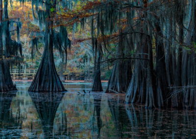 Caddo Lake Institute