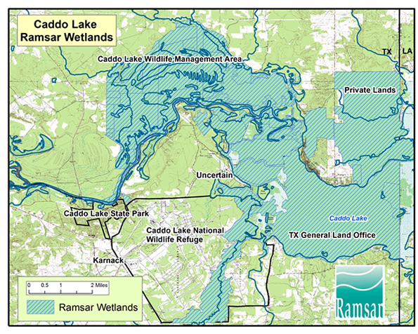 Galleries caddo lake institute for Fishing license georgia